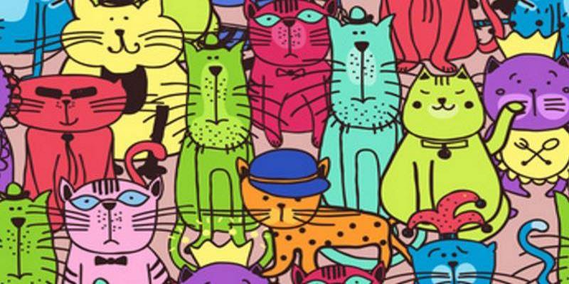Katzen-Party